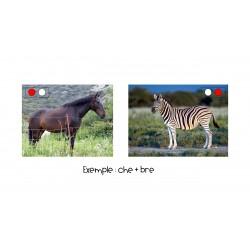 Des animaux étranges - manipulation de syllabes