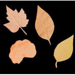 Magie des feuilles d'automne
