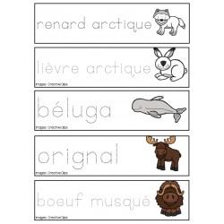Pré-écriture des animaux polaires