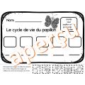 CYCLE DE VIE DU PAPILLON - IMPRIMABLE