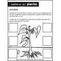 Les plantes à fleur // Sciences: 2e cycle