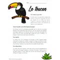 Texte informatif - Le toucan