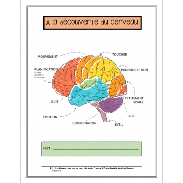 Dossier complet sur le cerveau - 3e cycle