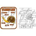 Cycle de vie - Escargot