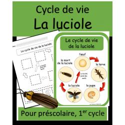 Cycle de vie - Luciole