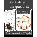 Cycle de vie - Mouche