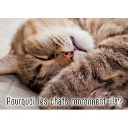 Le texte explicatif / Pourquoi les chats...