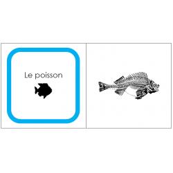 Classification des animaux: Poisson