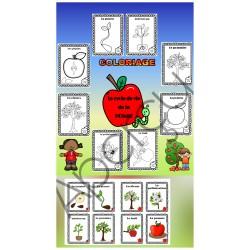 Pommes ~ cycle de vie COLORIAGE