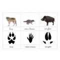Empreintes d'animaux