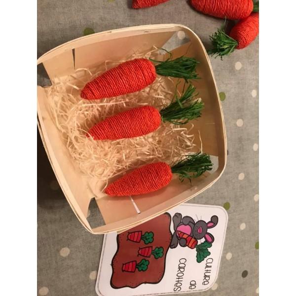 Culture de carottes