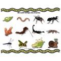 Les insectes - Mots-étiquettes (script et cursif)
