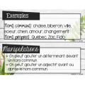 Affiches classes de mots - 3e cycle