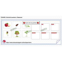 POMME /Cycle de la pomme / Séquence