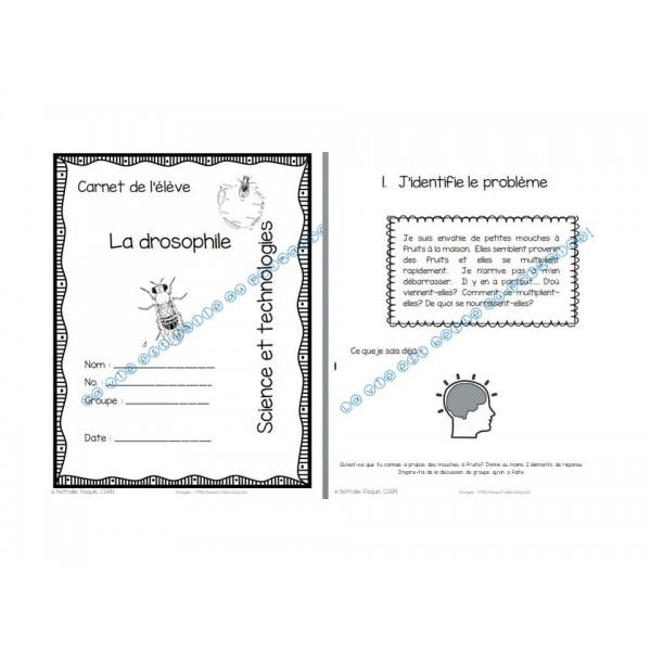 La mouche à fruits ou la drosophiles