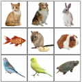Cartes Montessori : Les Animaux de Compagnie