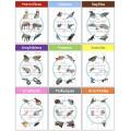 Le jeu des 9 familles d'animaux - Montessori