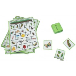 Loto insectes