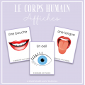 Corps humain - Affiches