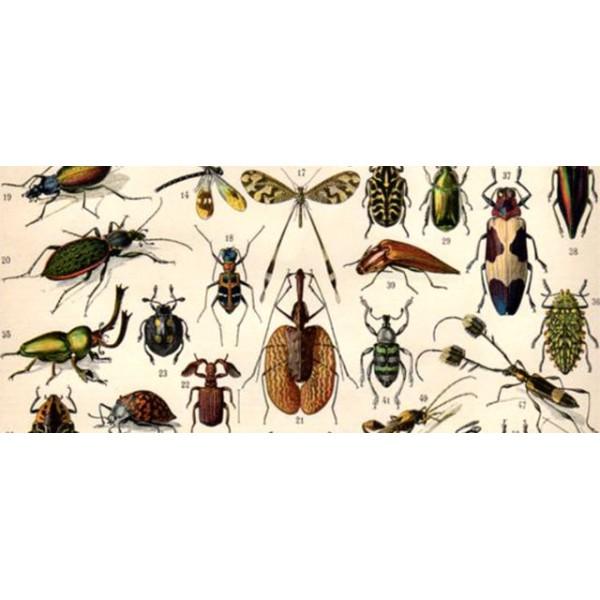 Mon insecte imaginaire