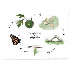 Cycle de vie papillon - blanc