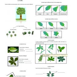 Les différents types de feuilles