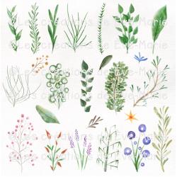 Clipart - Plantes aquarelle