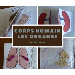 Cahier interactif-Corps humain : les organes