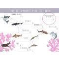 VOLUME - Niuhi l'aquarium réinventé