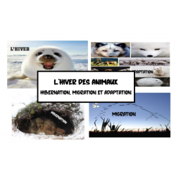 Animaux en hiver: hibernation,migration,adaptation