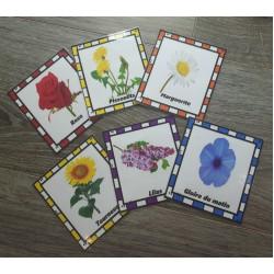 Cartes lexiques fleurs