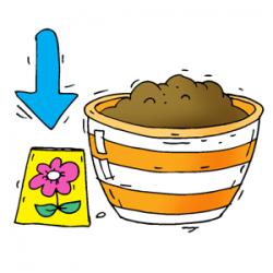 La croissance d'une plante