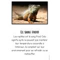 Livret de recherche animaux: Les reptiles