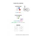 La structure de la phrase complexe