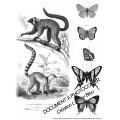 Chimères et animaux fantastiques