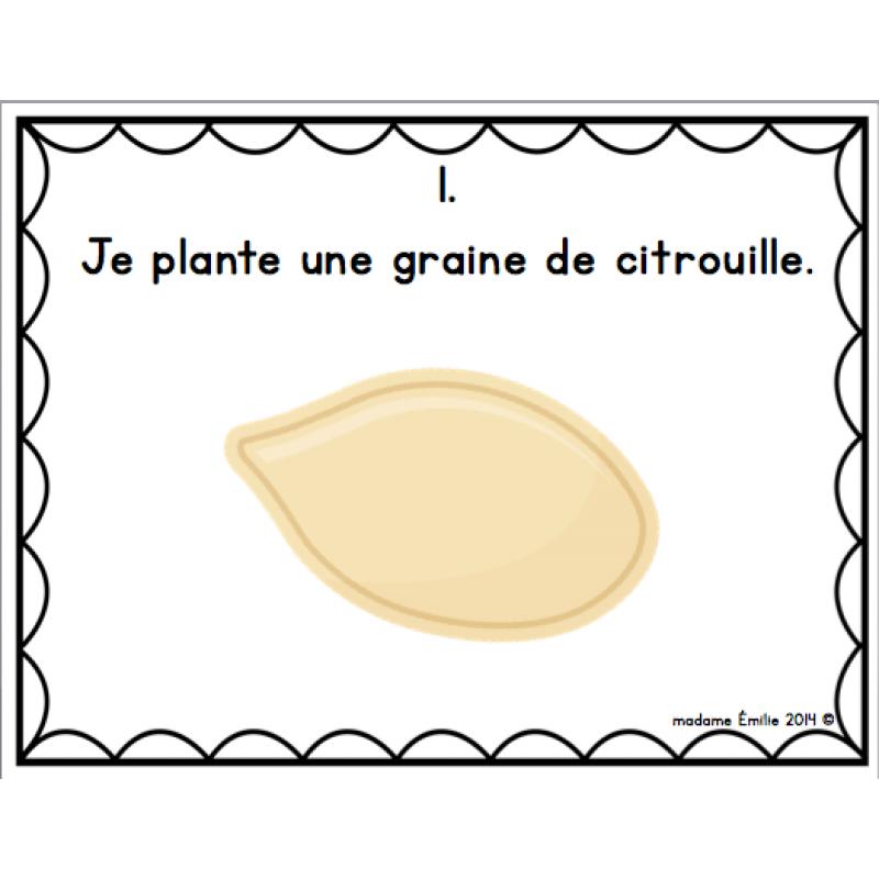 Cycle de vie de la citrouille - Faire griller des graines de citrouille ...