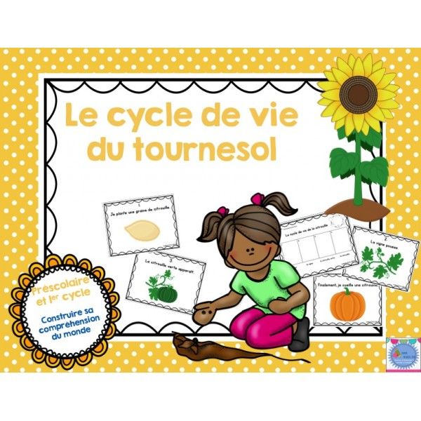 Cycle de vie Tournesol