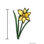 Atelier de mesure {les fleurs du jardin}