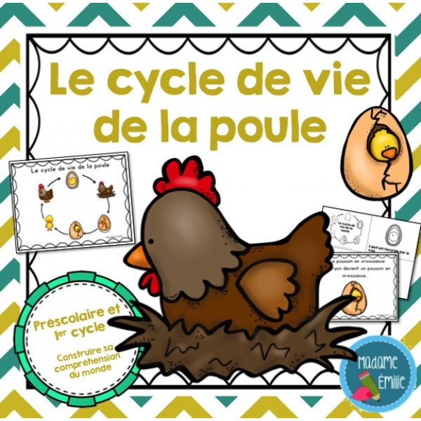 Cycle de vie la poule