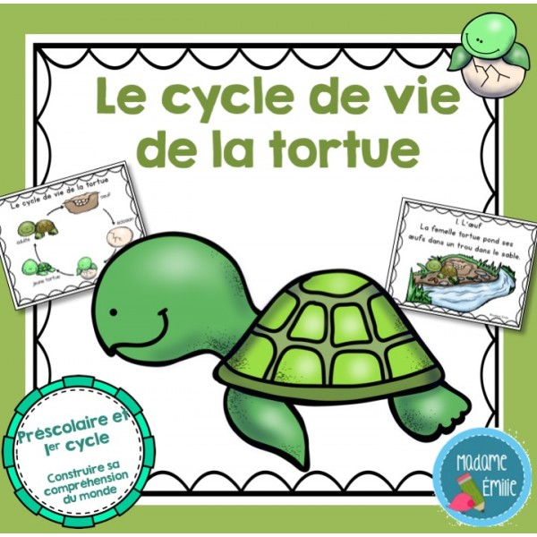 Cycle de vie Tortue