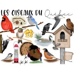 Cliparts des oiseaux du Québec