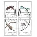 Mots-étiquettes sur les insectes