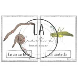 Mots-étiquettes sur les insectes (plus gros)