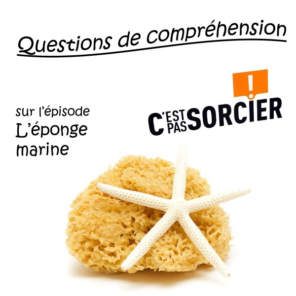 L'éponge marine - Compréhension
