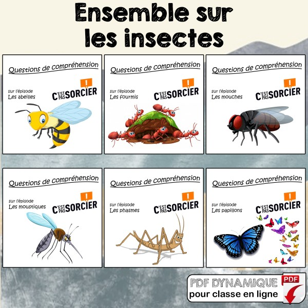 Les insectes - Ensemble de compréhensions