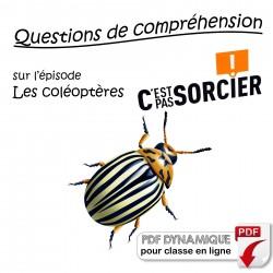 Les coléoptères - Compréhension
