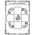 Le cycle des papillons