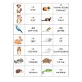 Bingo préscolaire (animal de compagnie)