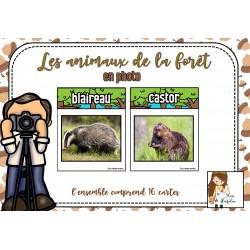 Les animaux de la forêt en photo